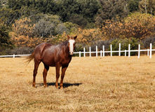 Large Strong Brown Colt Horse in HD Stock Photo