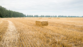 Large stubble field with packs of straw Royalty Free Stock Photos