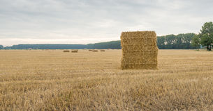 Large stubble field with stacked packs of straw Royalty Free Stock Photography