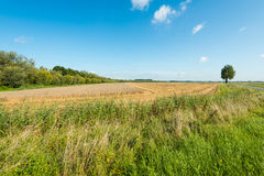 Large stubble field in summertime Royalty Free Stock Photos
