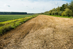 Large stubble field in summertime Royalty Free Stock Images