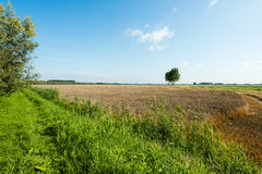 Large stubble field in summertime Royalty Free Stock Photo