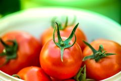 Macro shot of a group of freshly picked red ripe tomatoes. Large summer harvest. Macro shot of a group of freshly picked red ripe tomatoes Royalty Free Stock Photo