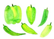 A large sweet green pepper on a white background. Isolated. Watercolor Royalty Free Stock Photo