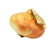 Large Sweet Onion Angle Stock Photo
