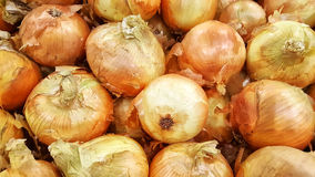 Large Sweet Yellow Onions Royalty Free Stock Photos