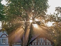 Rays of rising sun among trees. Large, tall deciduous trees. It`s morning. A light fog is drifting in the crowns. The rays of the rising sun pierce through the royalty free stock image