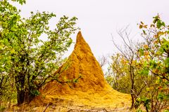 Large Termite Hill or Ant Hill in Kruger National Park Royalty Free Stock Photo