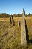 Large Termite Hills Royalty Free Stock Photography