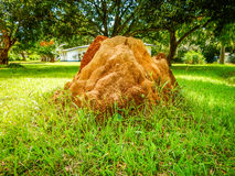 Large termite mound in the background of the residential compound. Liberia, Monrovia, West Africa. Termite nest within a well-kept residential compound in royalty free stock image