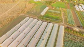 Large Territory Of Agricultural Greenhouses stock footage