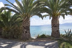 Large, thick palm trees on the beach. royalty free stock photos