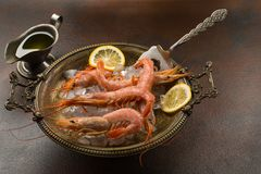 Large tiger Shrimps and slice of lemon fresh in ancient plate full of ice with cooking vane. served with sauce or olive oil. Over dark background stock photography
