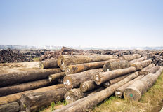 Large timber mill. In China Stock Images