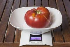 Large tomato. Stock Photos