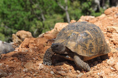 Large tortoise on the ground. stock photo