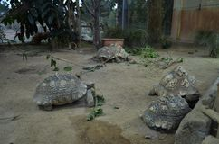 Large tortoises in a zoo royalty free stock photo