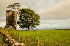 Large tree Alone. Tree and ruins in the countryside of Scotland Stock Photos