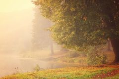A large tree with autumn leaves on the shore of a lake covered with thick fog. Royalty Free Stock Photography