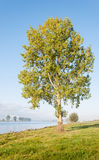 Large tree on the banks of a Dutch river Stock Photo