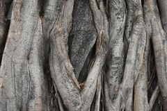 Large tree bark wood texture background. To be backdrop royalty free stock photos