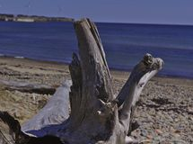 Large tree on beach 3519 stock photography