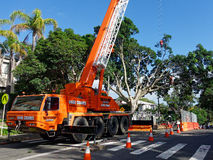 A Large Tree Being Pruned. A very large tree being pruned with a chainsaw, with the technician supported by a safety chain and harness hanging from a crane Royalty Free Stock Photography