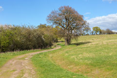 Large tree beside a country path in the Essex countryside in Spr Stock Photos