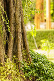 Large tree covered with plants Royalty Free Stock Images