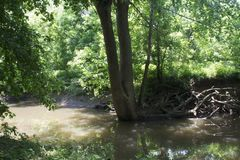 Large Tree on the creek bank Royalty Free Stock Images
