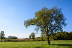 Large Tree on the Field. This is a large tree on a field in Minnesota Royalty Free Stock Image
