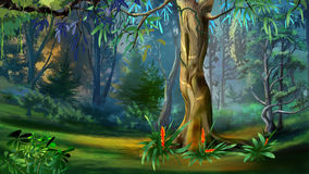 Large Tree in a Forest in a Summer Day. Digital Painting Background, Illustration in cartoon style character Royalty Free Stock Images