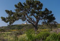 Large Tree in Front of Lighthouse Stock Photography