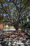 Large tree with hanging man size birdcages on Murray Street, Perth City Royalty Free Stock Images