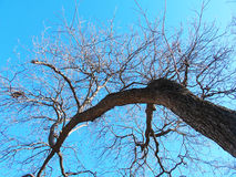Large Tree Royalty Free Stock Images