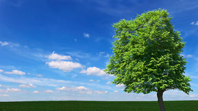Large tree among the meadows Royalty Free Stock Image