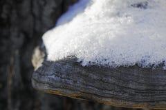 Large tree mushroom tinder in winter. Close-up Stock Photo