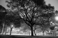 Large Tree in Park-Black and White-Horizontal Royalty Free Stock Photos