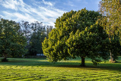 Large tree in park Stock Photo