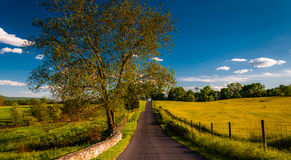 Large tree on a road through farmfields and rolling hills in Antietam National Battlefield Royalty Free Stock Photo