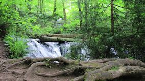 Tree roots and waterfalls. Large tree roots system in front of multiple waterfalls and dense forest stock footage