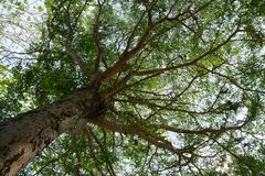 Large tree with shade that obscures sunlight. royalty free stock photography