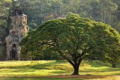 Large tree and temple Royalty Free Stock Image