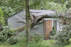 Large Tree Totals a Small House Stock Photos