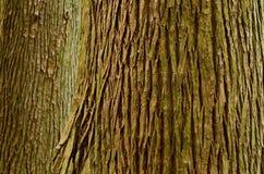 Large tree trunk Stock Photo