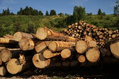 Large tree trunks. In the Alps Royalty Free Stock Photography
