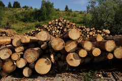 Large tree trunks. In the Alps Stock Photo