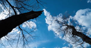 Large trees in the background moving clouds. Timelapse spring sky with floating clouds, flanked by large trees, which bloom soon leaves stock video footage
