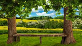 Large trees in the field, a bench, a view of nature. Beautiful scenery, a big bench between trees, a field with yellow flowers, a sky with clouds Stock Images