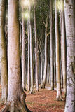 Large trees in the forest Stock Photography